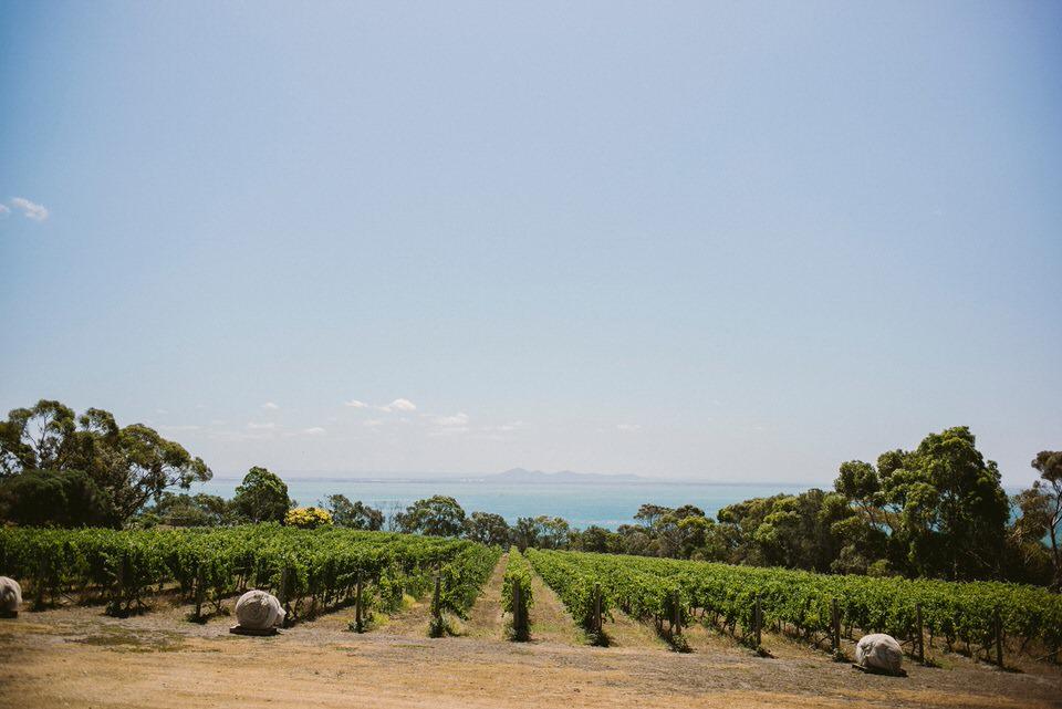 Landscape of Vineyard and Ocean